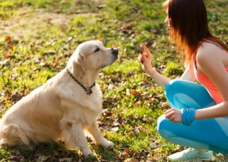 Dog Sitting Pretty with Treat