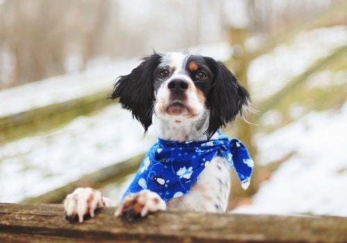 keeping dog safe - dog day care and training center Bonita Springs