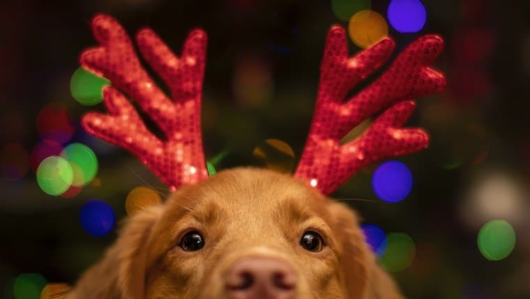 gifts, dogs, christmas