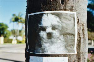 Lost Dog Image